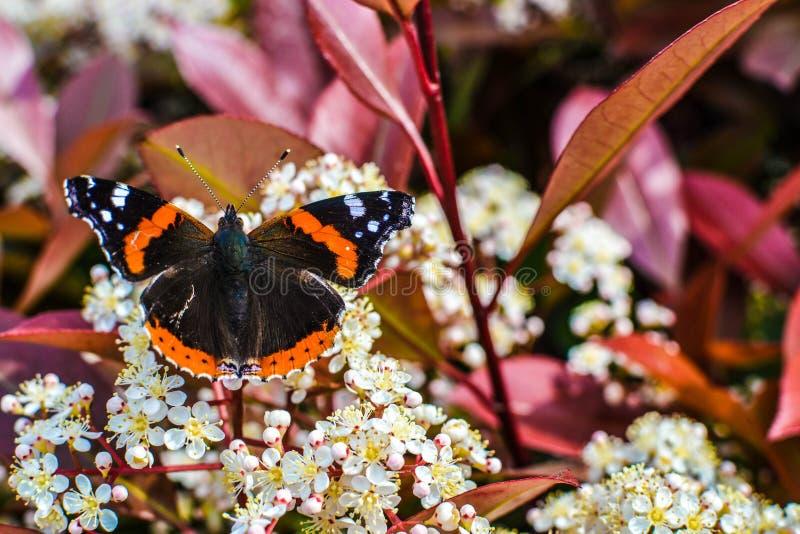 Vlinder op de bloemen stock foto's