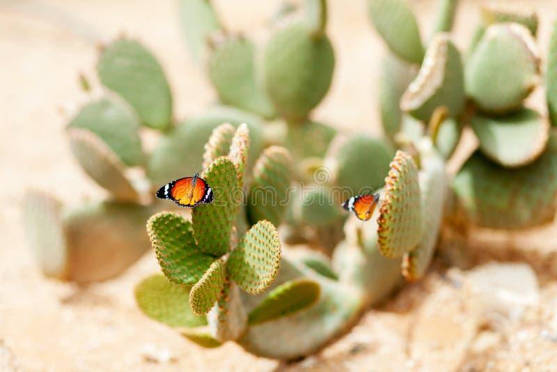 Vlinder op de cactus stock afbeelding