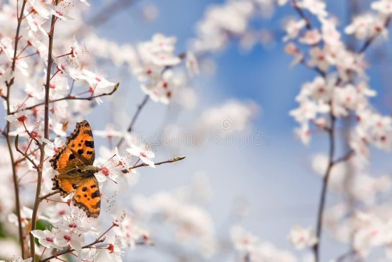 Vlinder op de lentebloemen royalty-vrije stock fotografie