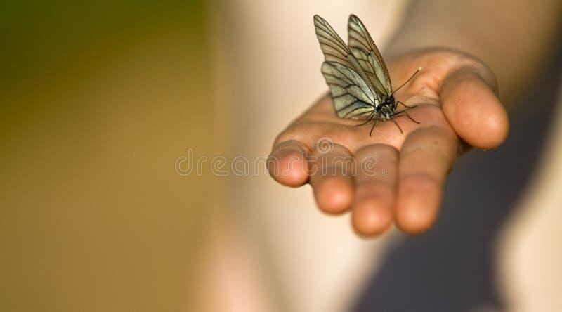 Vlinder op de palm van het kind stock fotografie