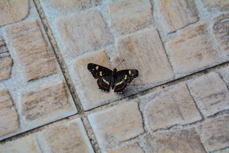 Vlinder op de vloer stock afbeelding