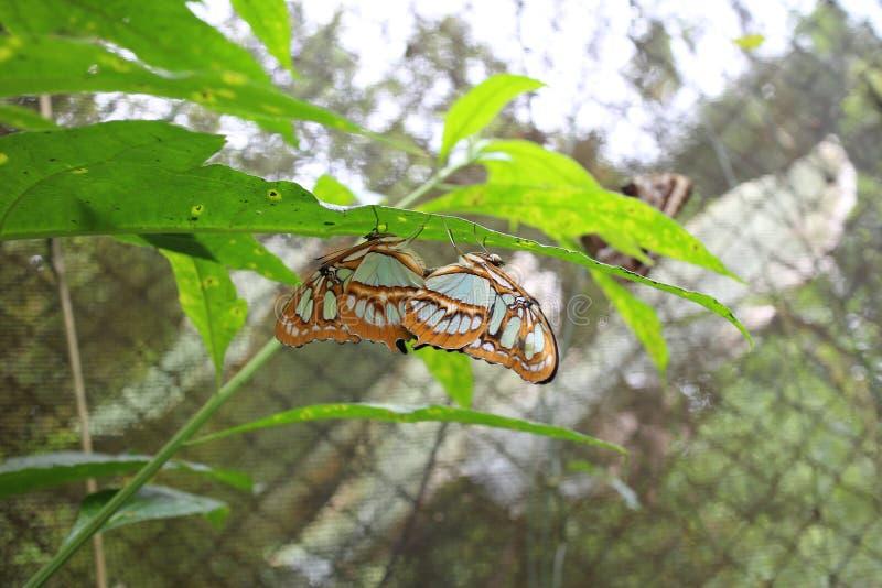 Vlinder op een Blad royalty-vrije stock fotografie