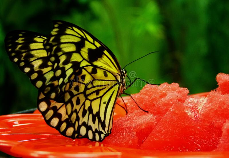Vlinder op een bloem royalty-vrije stock afbeeldingen