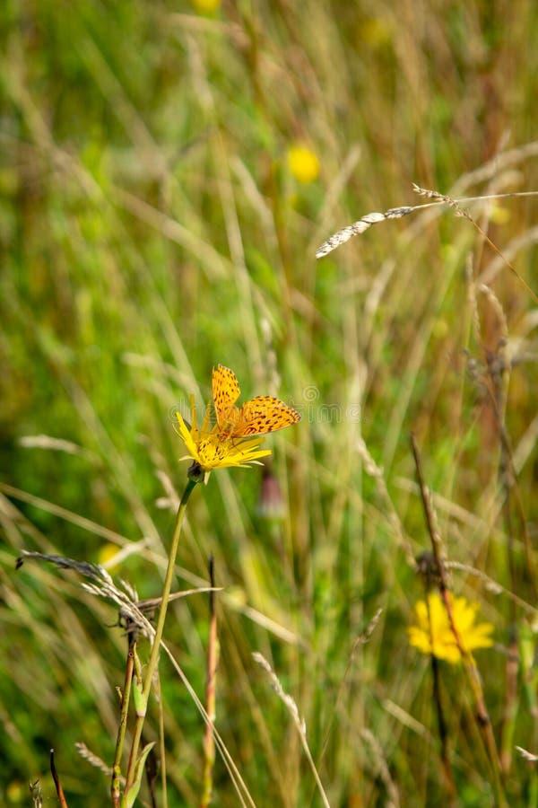 Vlinder op een bloem in het gras royalty-vrije stock afbeeldingen
