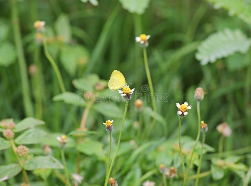 Vlinder op een grasbloem stock fotografie