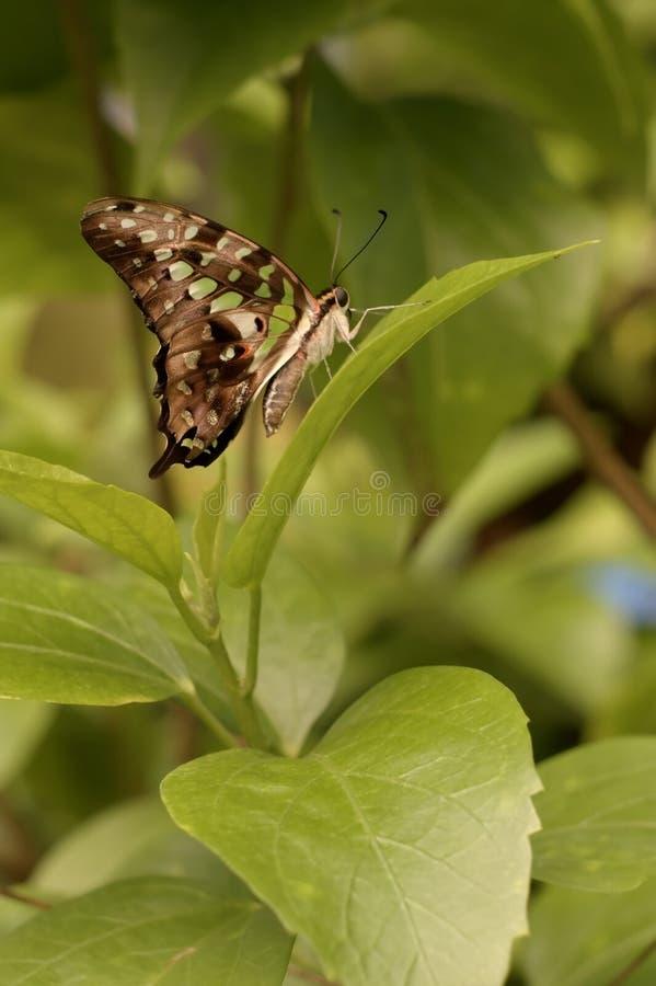 Vlinder op een installatie royalty-vrije stock foto's
