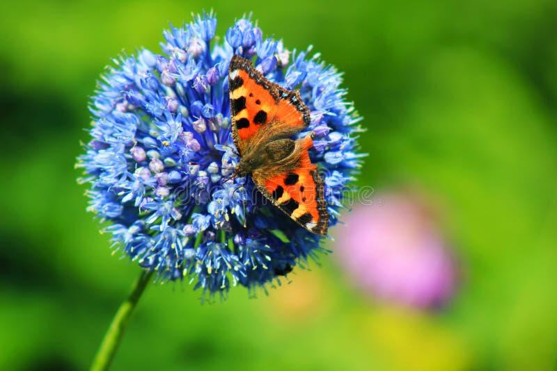 Vlinder op een ongebruikelijk mooie bloem stock afbeelding