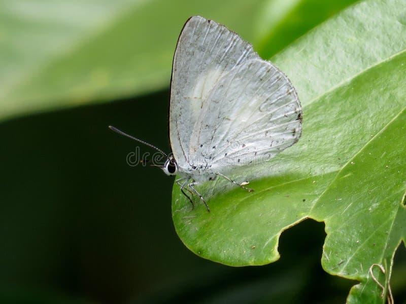 Vlinder op een regenwoudblad dat wordt neergestreken royalty-vrije stock fotografie
