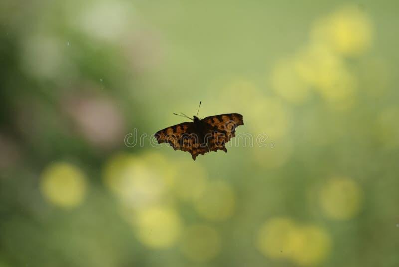 Vlinder op een stuk van glas royalty-vrije stock afbeeldingen
