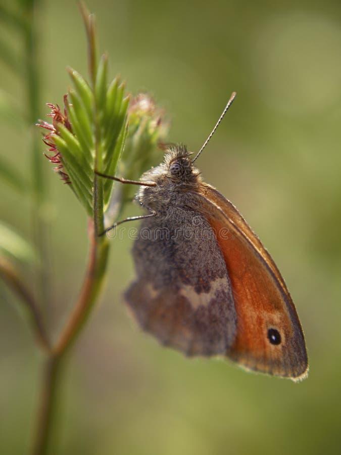 Vlinder op een tak royalty-vrije stock afbeelding