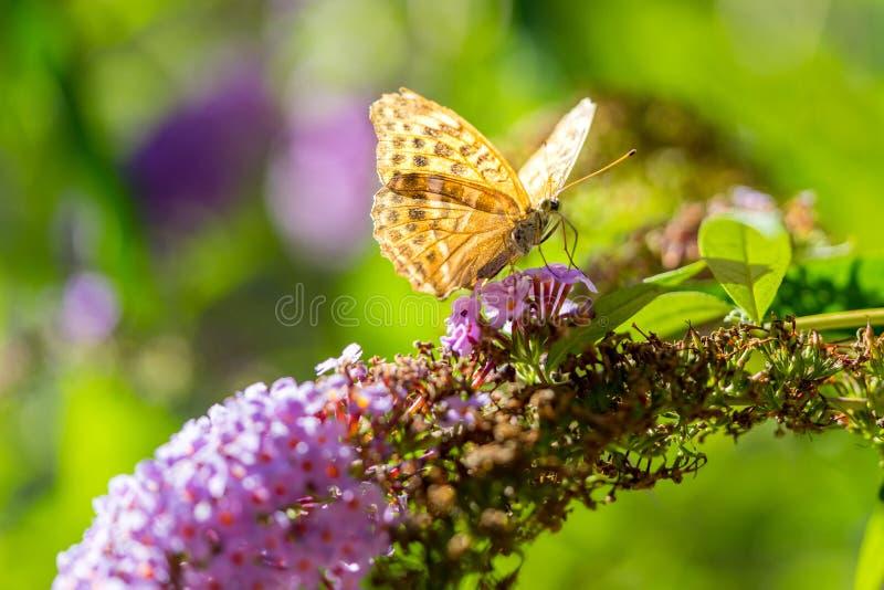 Vlinder op een zeer kleurrijke achtergrond royalty-vrije stock foto's