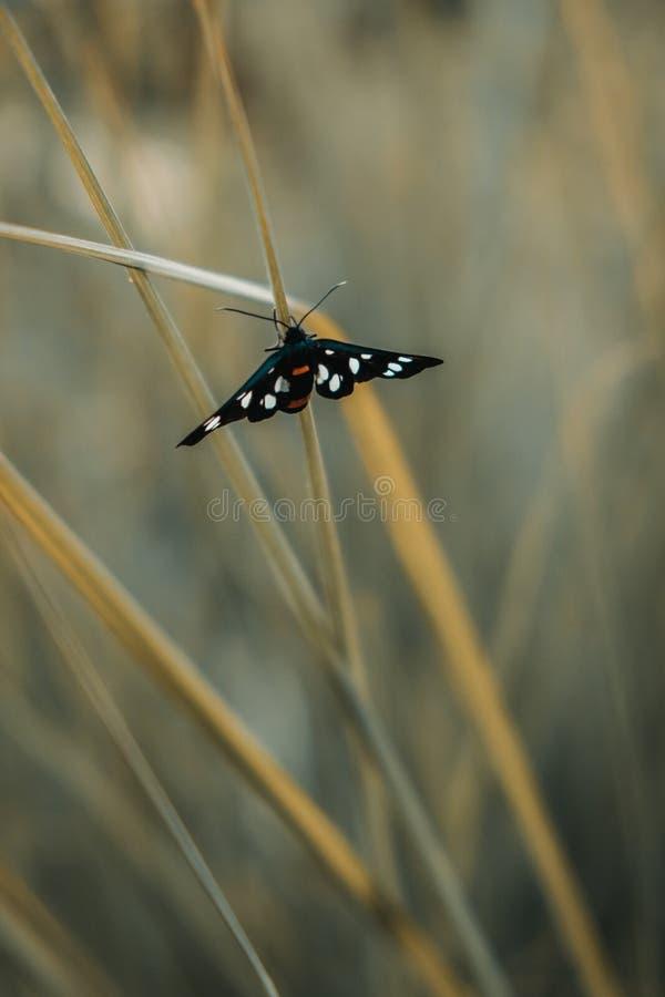 Vlinder op grasblad royalty-vrije stock afbeeldingen