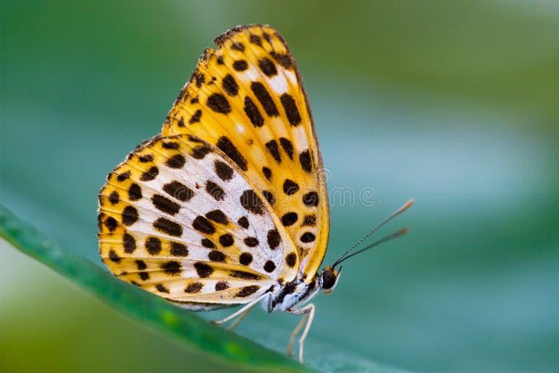 Vlinder op het blad stock foto's