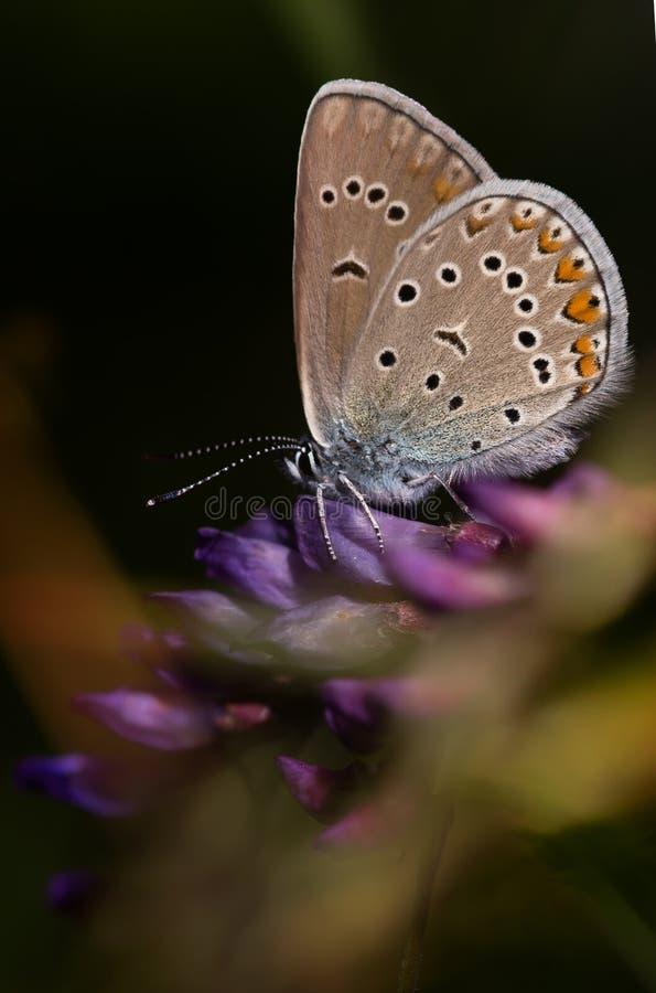 Vlinder op het Blad stock afbeelding
