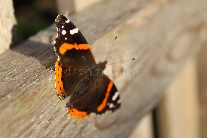 Vlinder op Omheining stock afbeeldingen