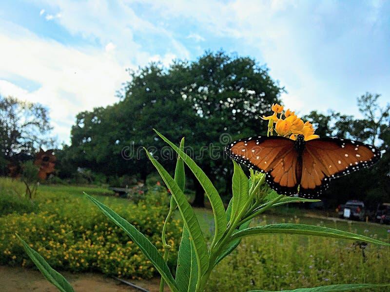 Vlinder op Plicht stock afbeelding