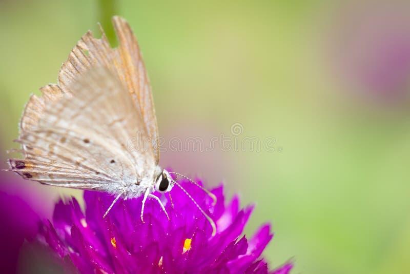 Vlinder op roze bloem met gras royalty-vrije stock foto