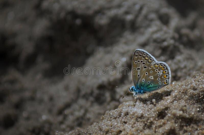 Vlinder op strand stock foto
