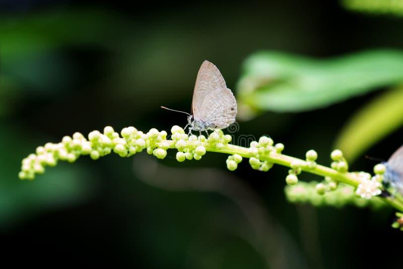 vlinder op tak in wildernis van Thailand royalty-vrije stock foto's