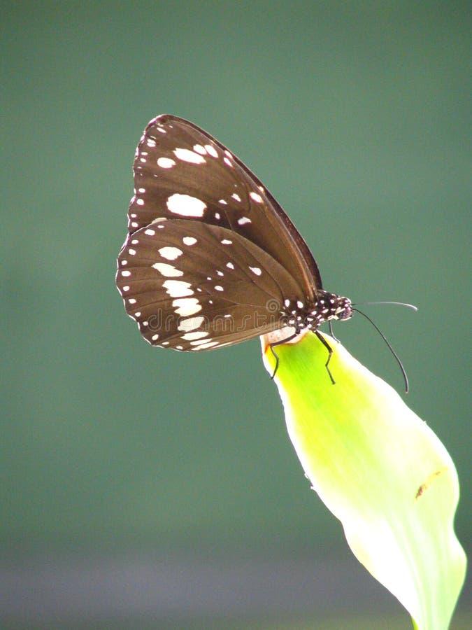 Vlinder op verlof stock afbeeldingen