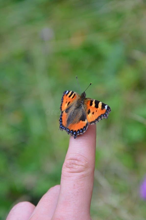 Vlinder op vinger stock foto