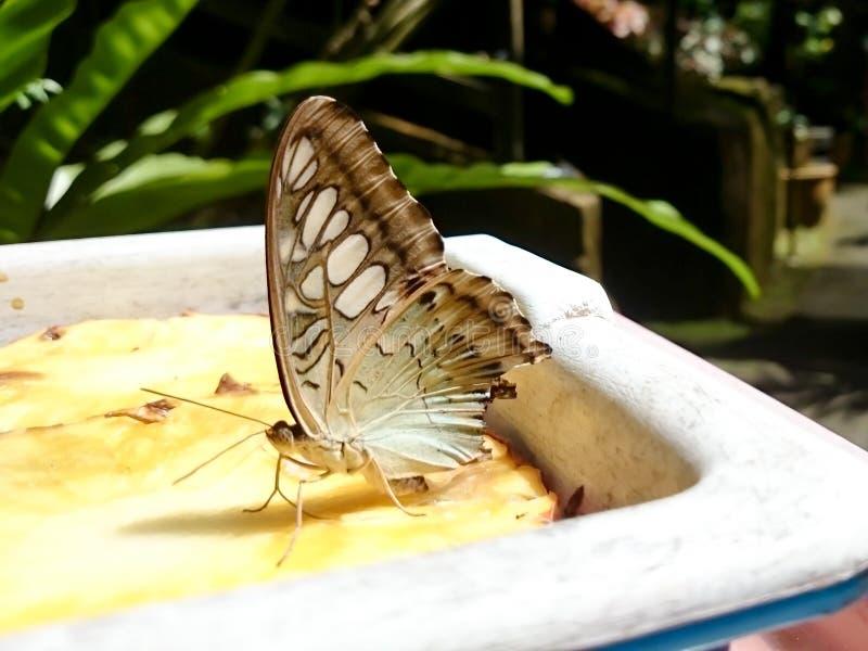 Vlinder op voedsel wordt neergestreken dat stock foto's