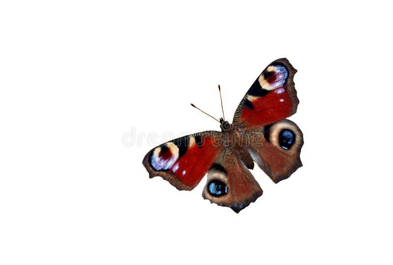Vlinder op witte achtergrond royalty-vrije stock foto