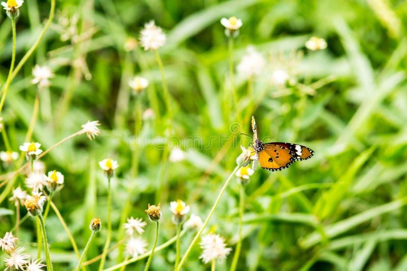 vlinder op yellowerbloem royalty-vrije stock foto's