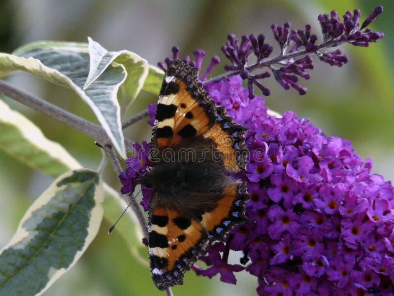 Vlinder over een bloem royalty-vrije stock fotografie