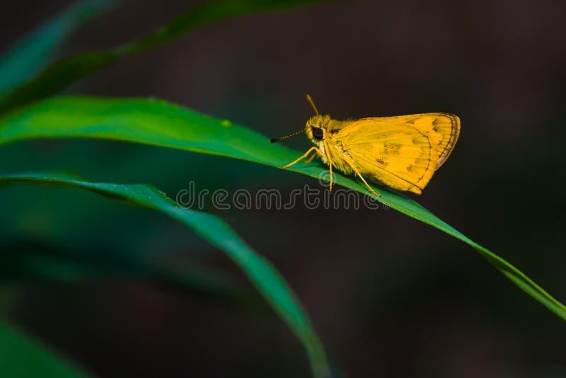 Vlinder tropisch bos stock afbeelding