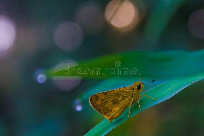 Vlinder tropisch bos stock foto's