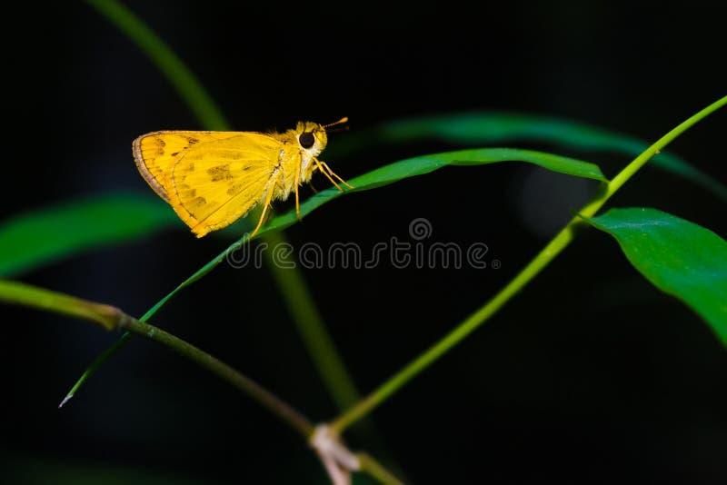 Vlinder tropisch bos royalty-vrije stock afbeeldingen