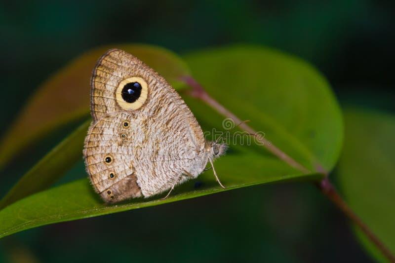 Vlinder tropisch bos royalty-vrije stock foto's