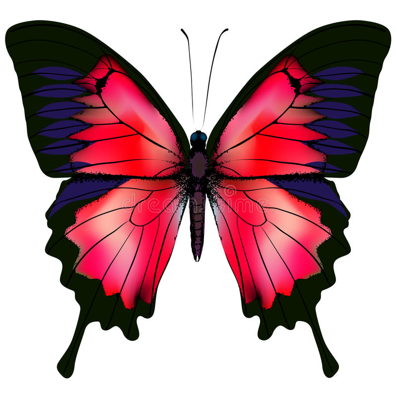 Vlinder Vector illustratie royalty-vrije illustratie