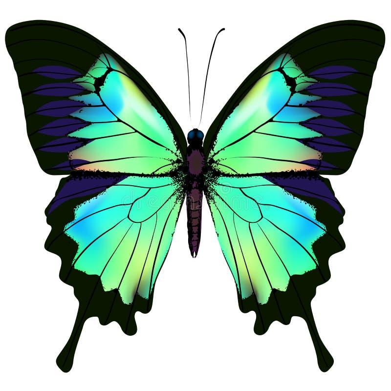 Vlinder vectorillustratie stock illustratie