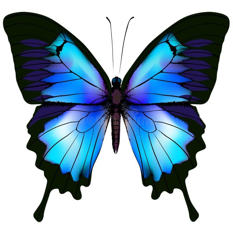 Vlinder vectorillustratie vector illustratie