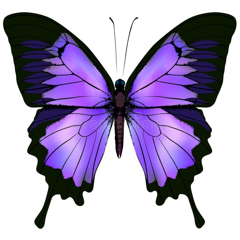 Vlinder Vectorillustratie van mooie roze en purpere kleur royalty-vrije illustratie