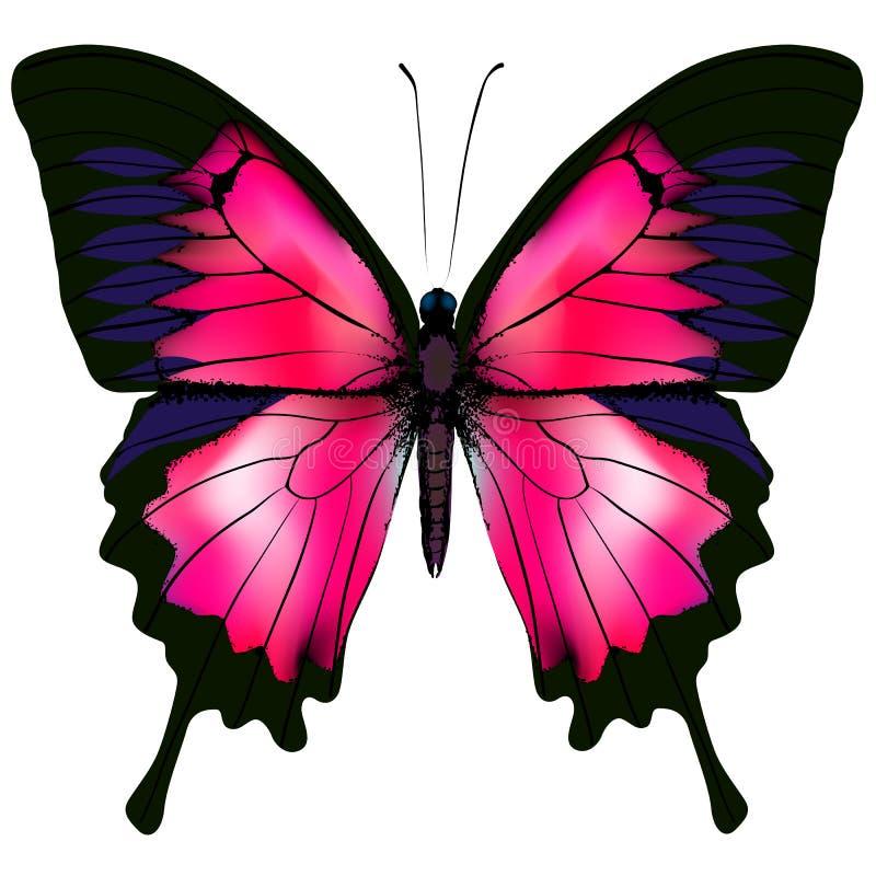 Vlinder Vectorillustratie van rode die vlinder op witte achtergrond wordt geïsoleerd royalty-vrije illustratie