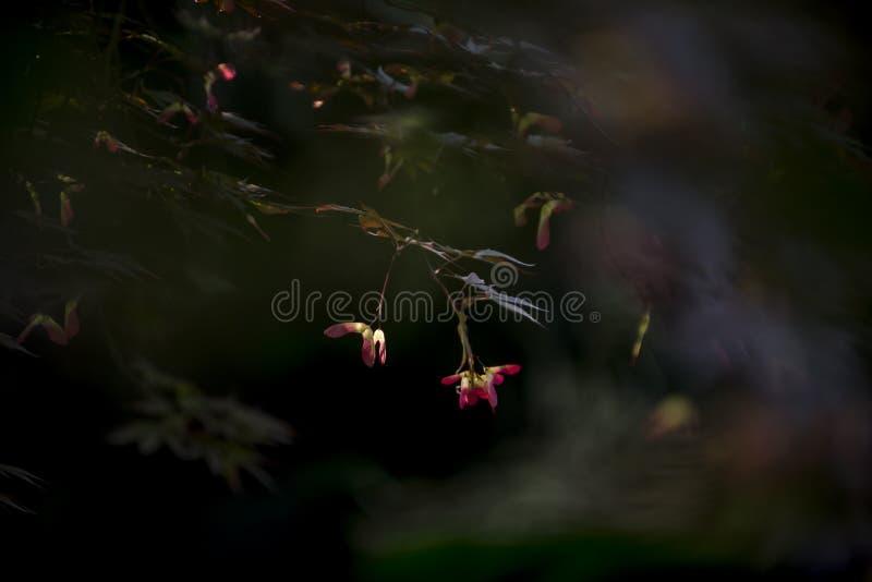 Vlinderbloem stock afbeeldingen