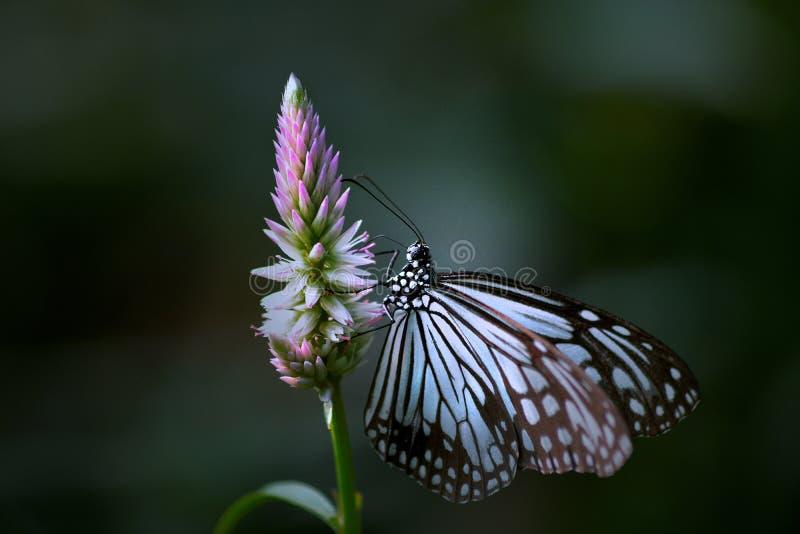 Vlinderengel stock afbeelding