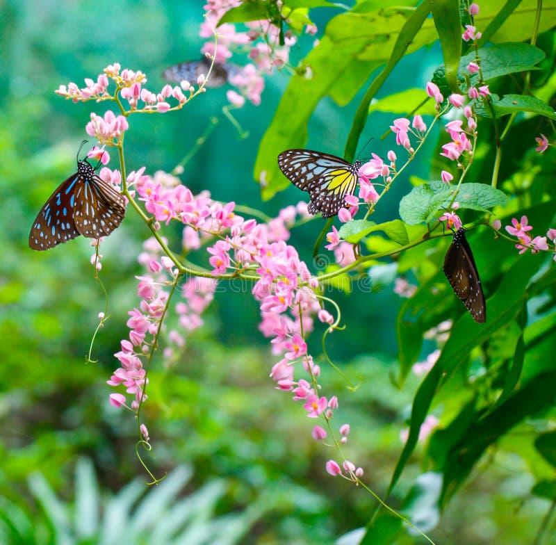 Vlinderpark stock afbeelding