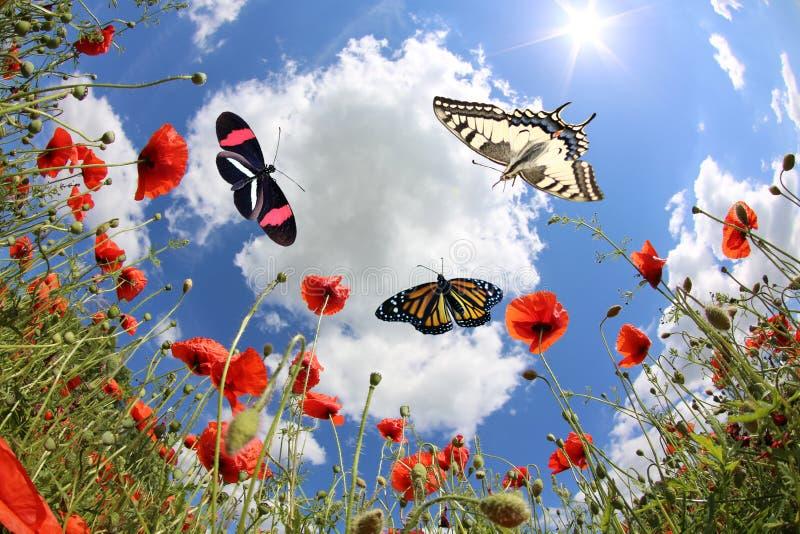 Vlinders bij de lente royalty-vrije stock foto