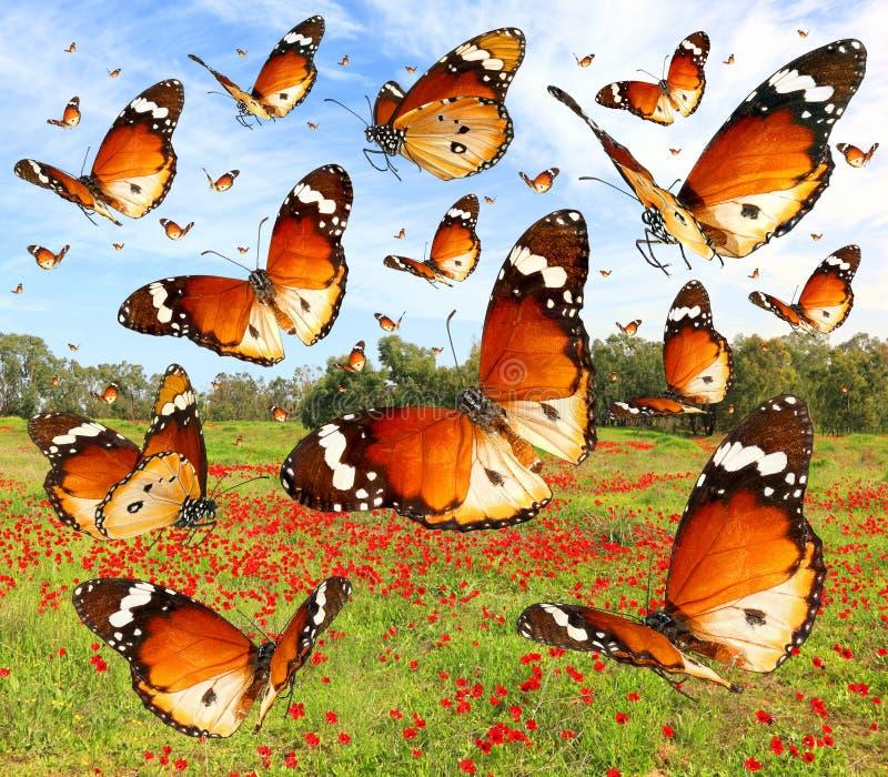 Vlinders die over de weiden vliegen royalty-vrije stock afbeelding