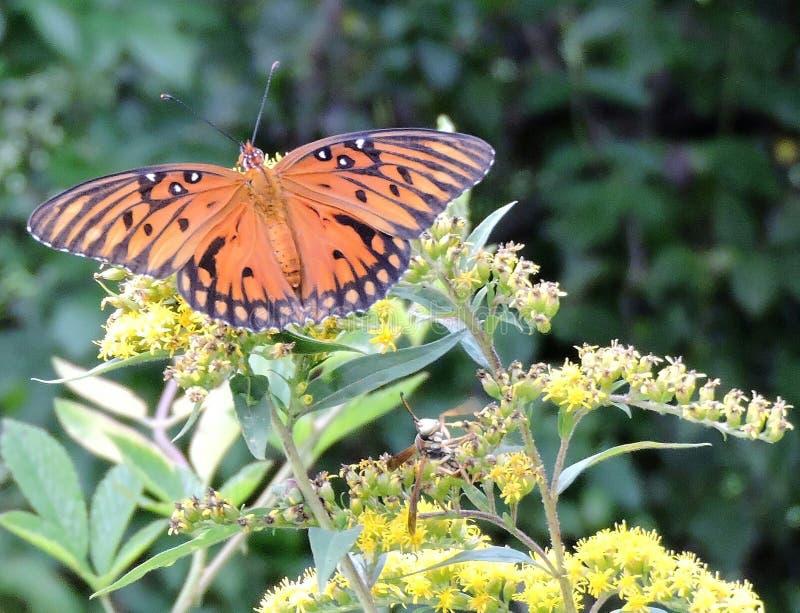 Vlinders en wespen stock afbeelding