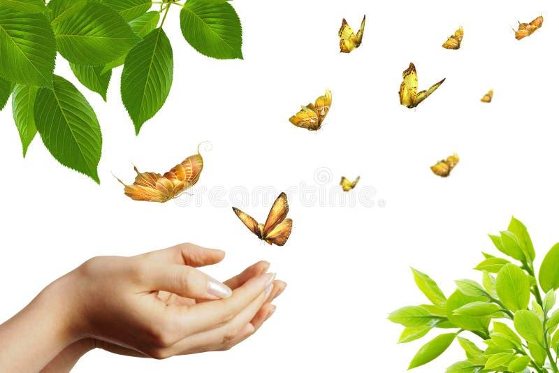 Vlinders in groen royalty-vrije stock fotografie