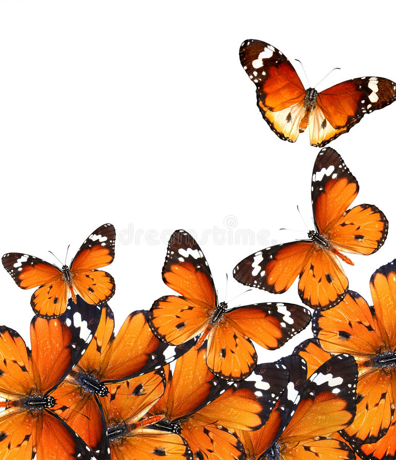 Vlinders magische wereld stock fotografie