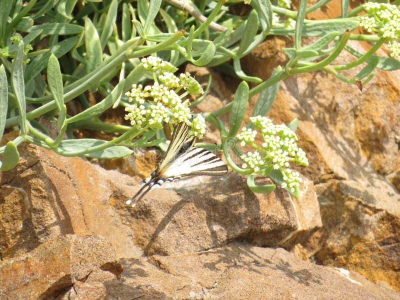 Vlinders met de rijkste verscheidenheid van het kleuren stock foto