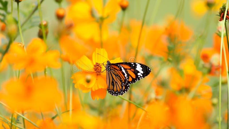 Vlinders onder de Bloemen stock fotografie