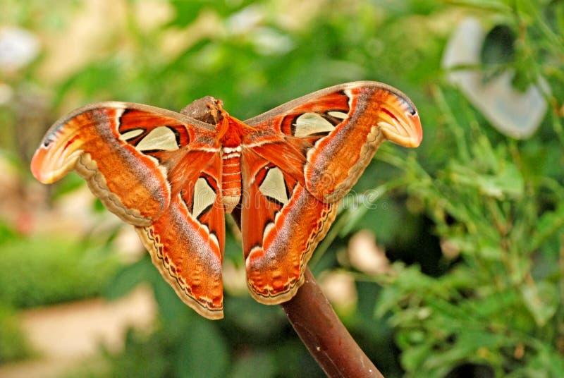 Vlinders op bladeren royalty-vrije stock fotografie