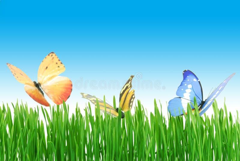 Vlinders op de weide stock foto